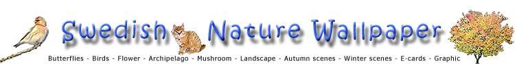 Butterflies - Birds - Flower - Archipelago - Mushroom - Landscape - Autumn scenes - Winter scenes
