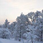 Vinteridyll snölandskap